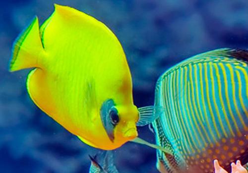 pesci-acquario