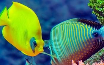 pesci-acquario-slide-001