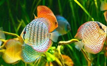 Pesci d 39 acquario for Pesci laghetto vendita