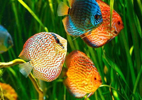Pesci for Pesci acquario