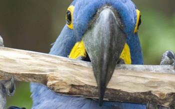 uccelli-pappagalli-slide-002