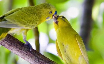 uccelli-pappagallini-slide-001
