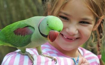 uccelli-parrocchetti-slide-003