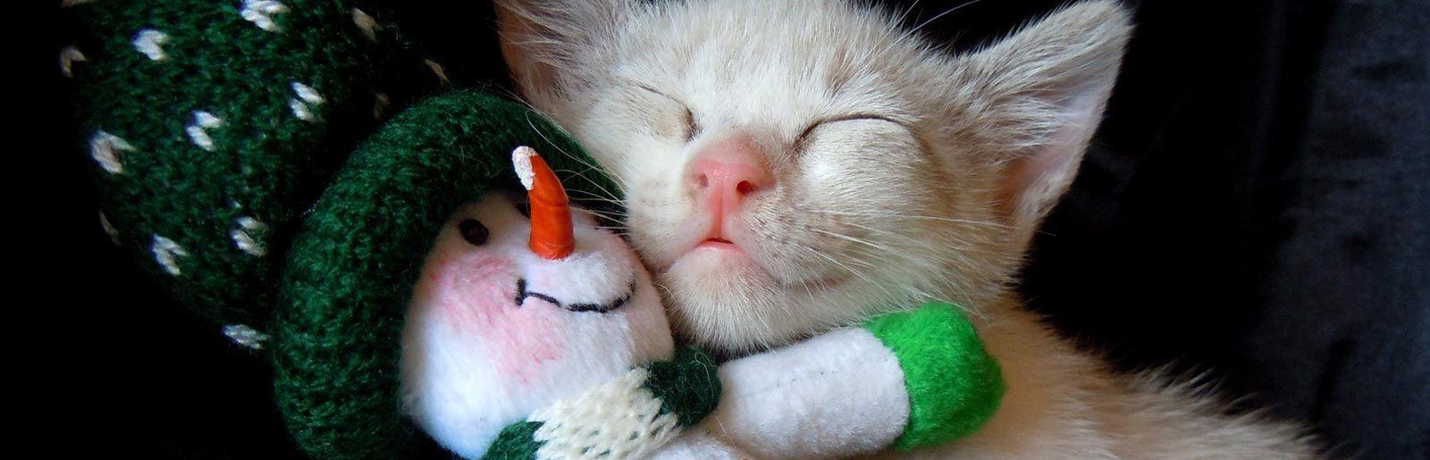gatto-con-pupazzo-di-neve