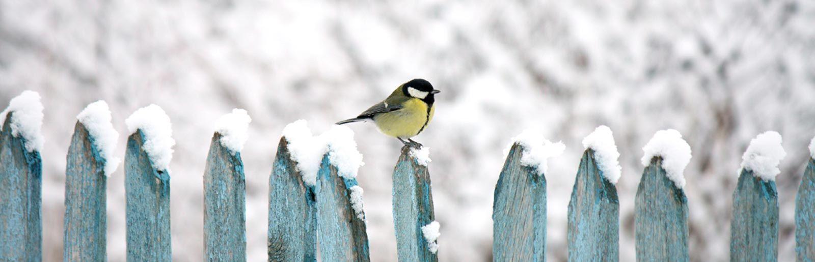 uccellino-sopra-staccionata-con-neve