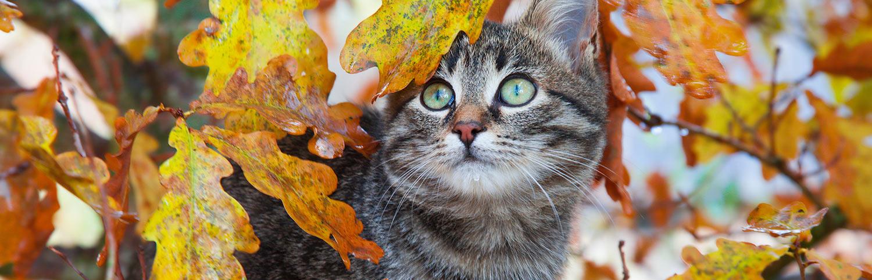 foto-testata-gatto-autunno-1