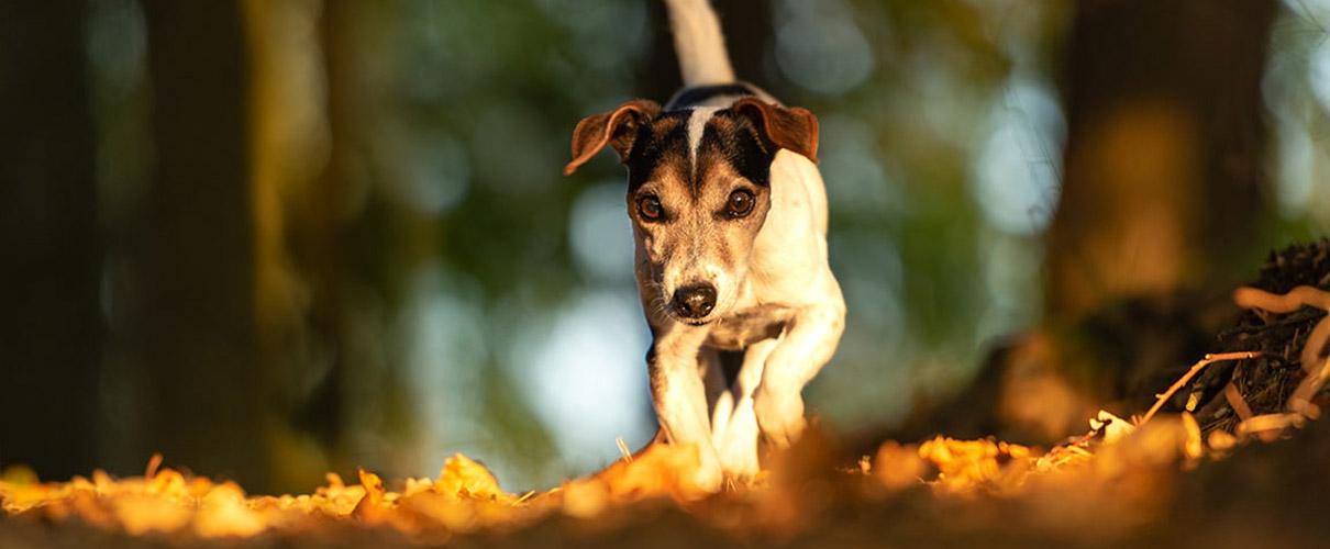 slide-home-autunno-cane